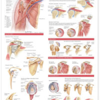 Educational and Anatomical Posters